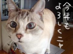 newyear_shami.jpg